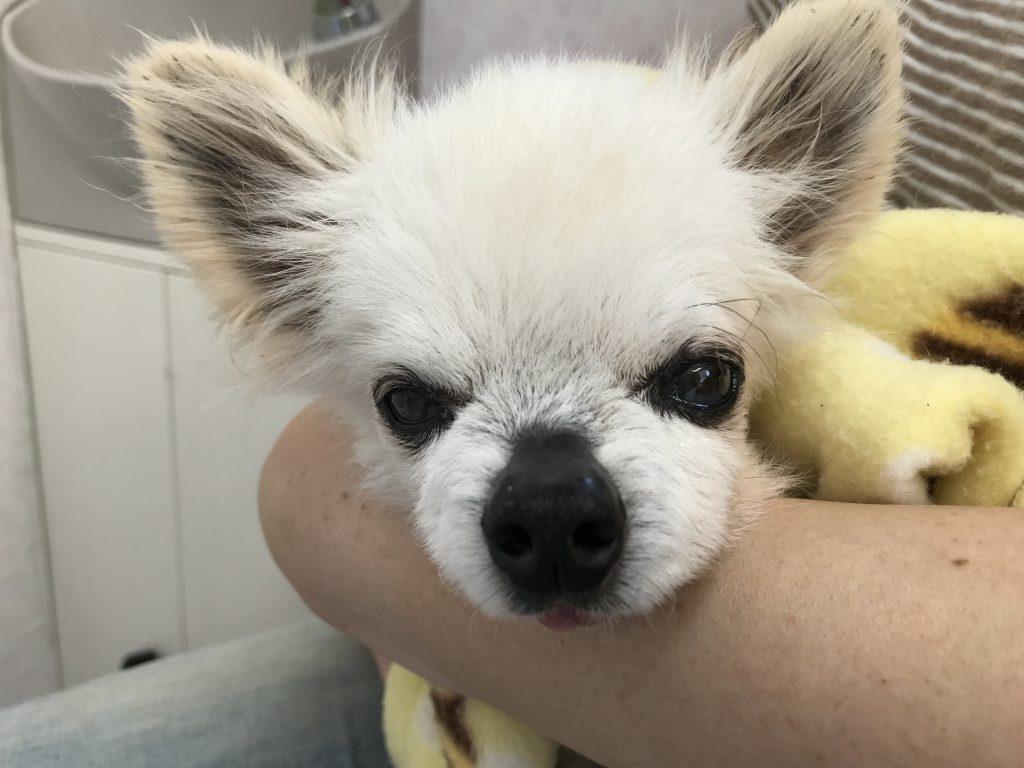 老犬 シニア犬 下痢 老化