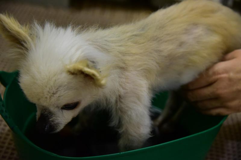 マコモ 真菰 風呂 シニア犬