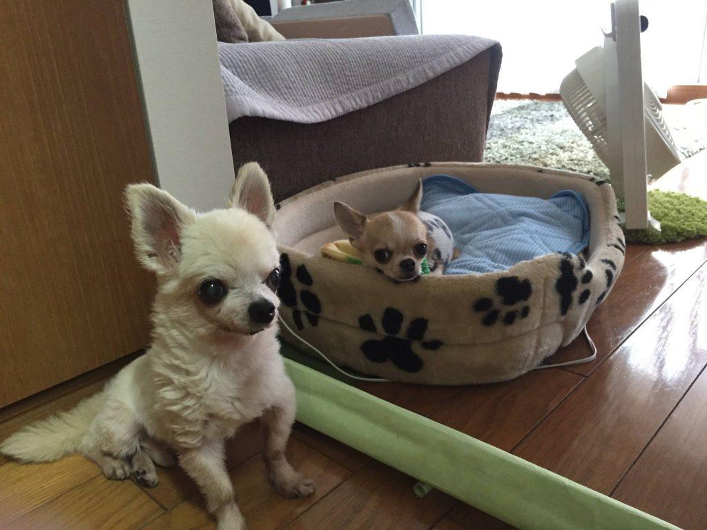 老犬 シニア犬 老化対策