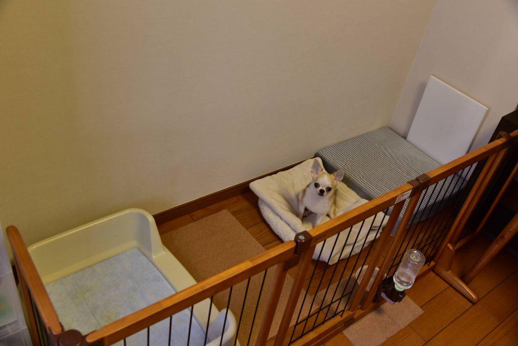 犬のハウスとベッドとトイレ