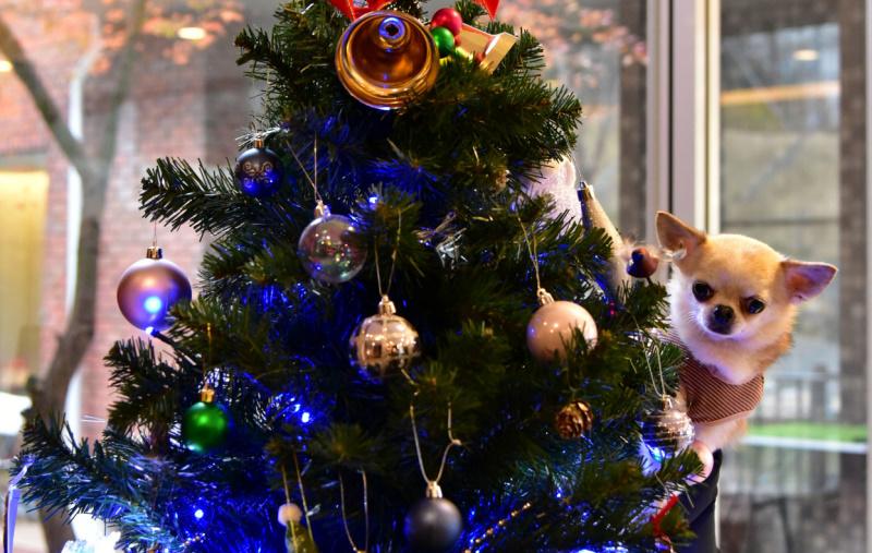 HOTEL 凜香 犬とクリスマスツリー