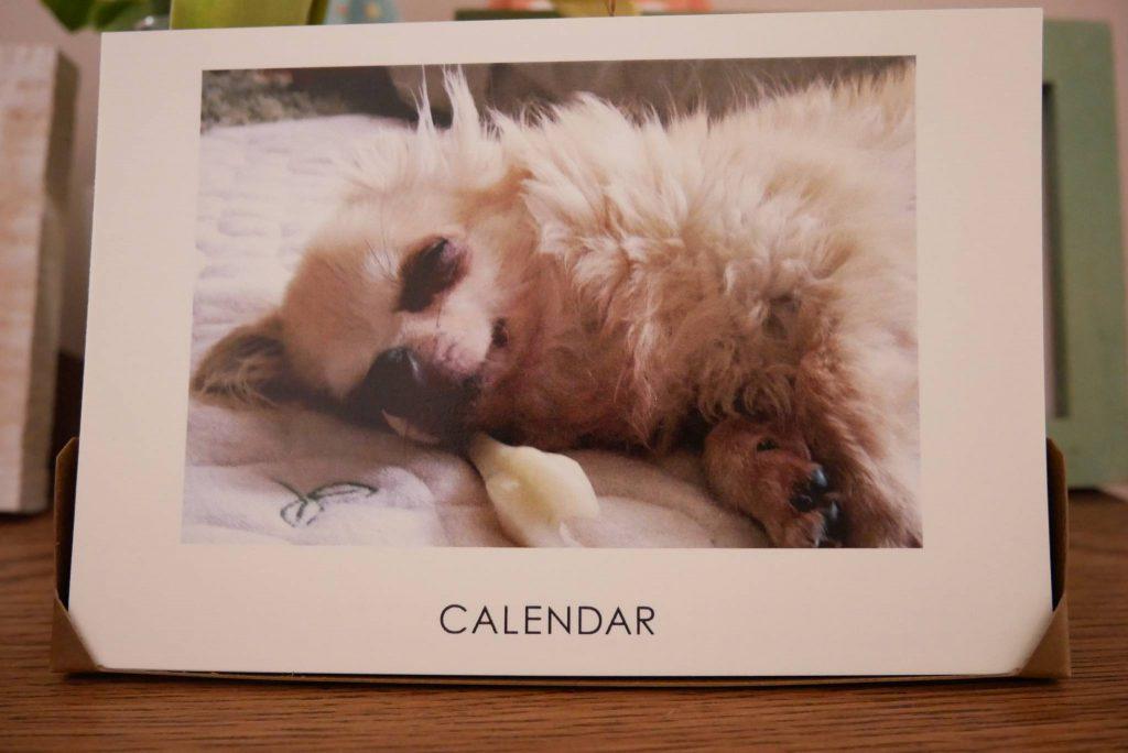 犬のフォトカレンダー