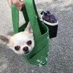 犬 チワワ ドッグ トレーニング しつけ