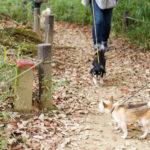 犬 チワワ ドッグ トレーニング しつけ 里山 散歩 散策