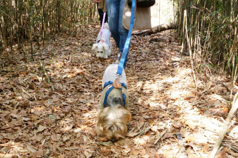 犬 しつけ チワワ ドッグ トレーニング 里山 散歩 散策 横浜 自然