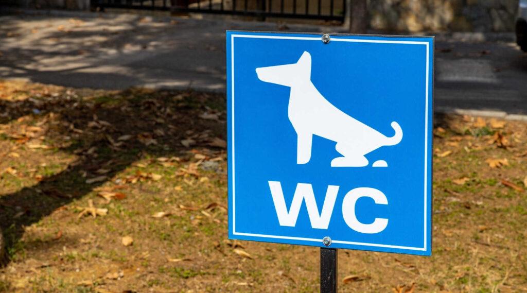 犬 チワワ ドッグ トレーニング しつけ 里山 散歩 散策 横浜 自然 シニア