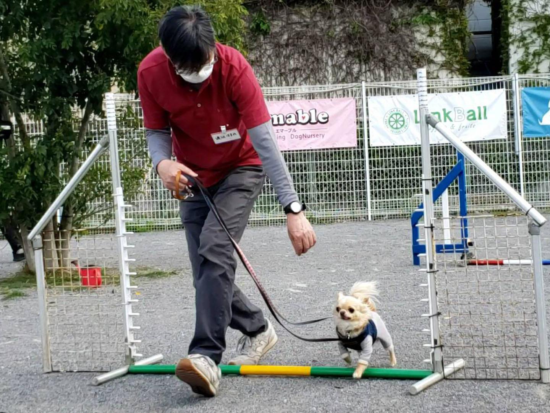 犬 チワワ ドッグ トレーニング しつけ 里山 散歩 散策 横浜 自然